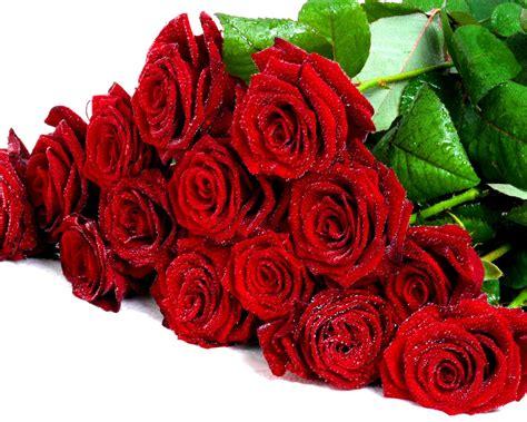 buket fresh red roses flower wallpaper hd wallpaperscom