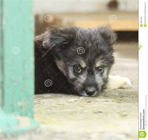small black puppy small black homeless puppy royalty free stock photos image 26087198