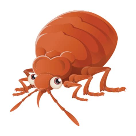 bed bugs spanish information about bed bugs the cleverest pest in houston