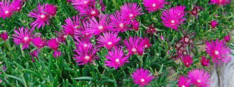 fiori in estate fiori d estate per il giardino cose di casa
