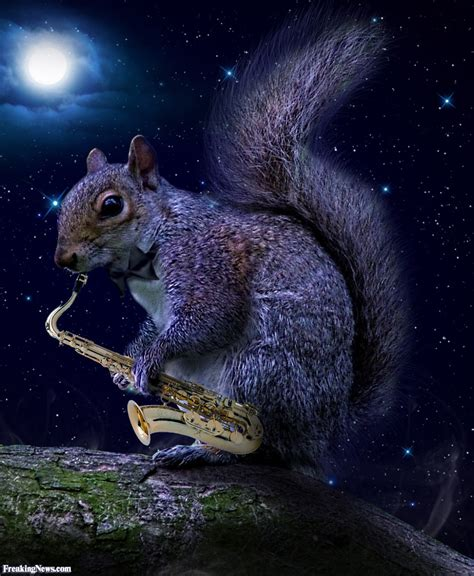 a picture of a squirrel a saxaphone at pictures