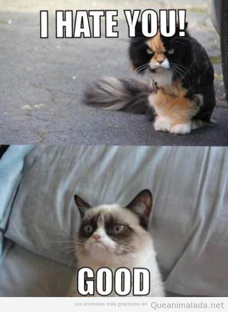 Meaning Of Black Cat At Your Door by Imagenes Y Memes Graciosos De Gatos Para Whatsapp Fondos Wallpappers Portadas