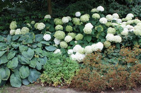 pflanzen garten versand plants pflanzen versand plants