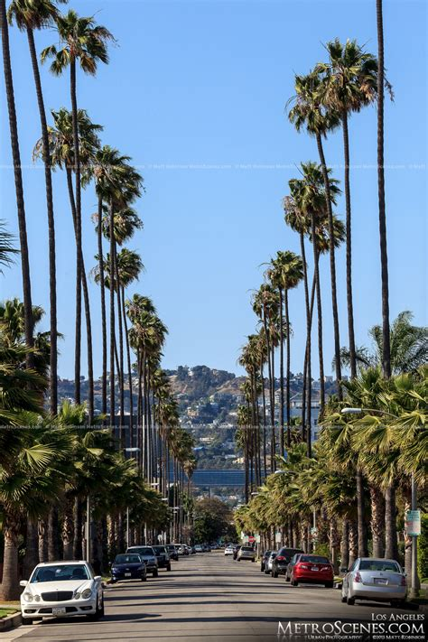 301 Moved Permanently by Los Angeles Palm Trees Bing Images