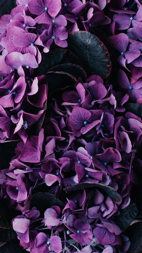 purple flower wallpaper uk the 25 best iphone wallpaper purple flower ideas on