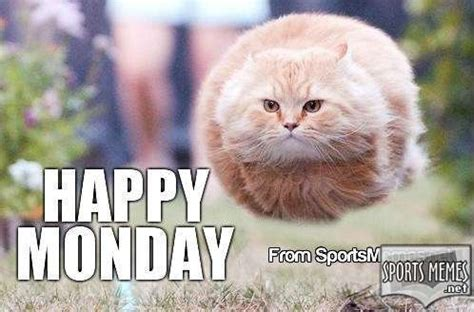 Happy Monday Meme - happy monday flying cat meme