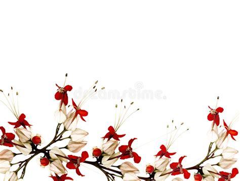 imagenes negras y rojas flores de mariposa rojas y negras foto de archivo imagen