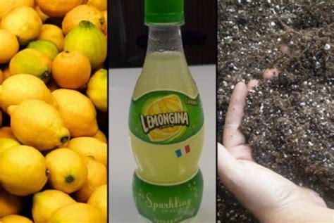 Minuman Collagen Rasa Lemon hah di jepang ada minuman rasa kotoran republika