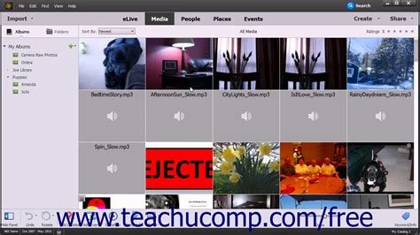 adobe photoshop organizer tutorial photoshop elements 15 tutorial the organizer environment