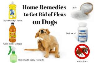 home remedy for fleas on dogs get rid of fleas in carpet home remes carpet vidalondon