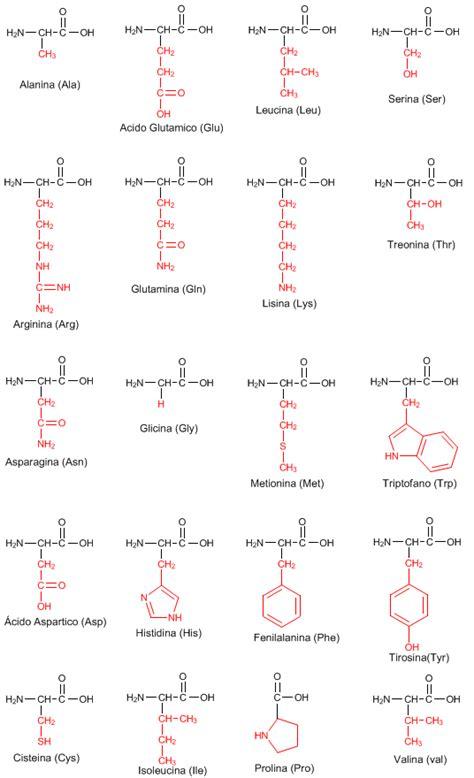 proteinas e amino cidos amino 225 cidos