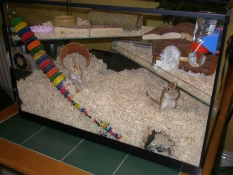 gerbil bedding hamster talk gerbil week gerbilariums