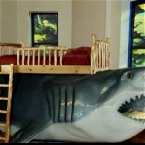 Shark Bed by 8 Best Images About Shark Beds On Cats Posts