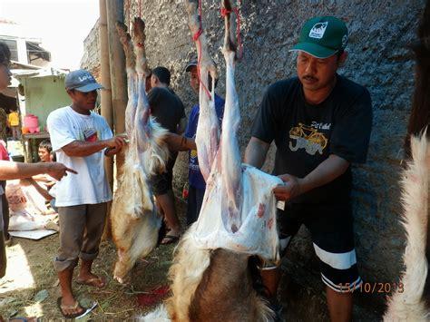 Pisau Untuk Menguliti Sapi pembangunan masjid baiturrahman penyembelihan hewan kurban