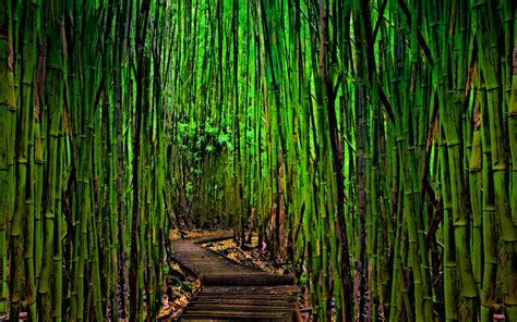 imagenes wallpaper bamboo wallpaper bamboo wallpapersafari
