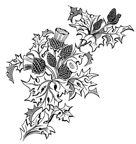 black embroidery pattern vintage thistle picture embroidery pattern the