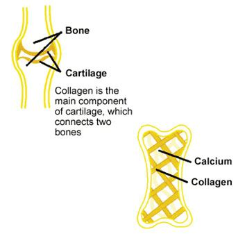 Collagen Dust Hanis Zalikha apa itu kolagen hanis healthy lifehanis healthy