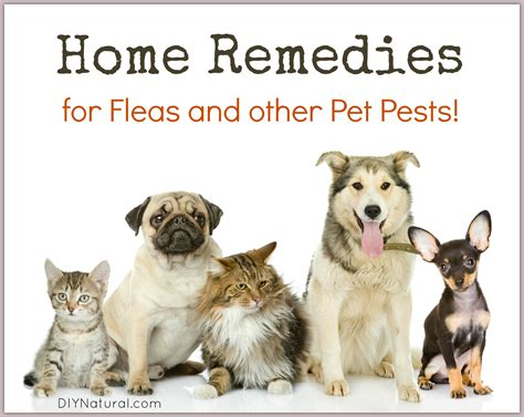 home remedies for fleas and other pests on your pets