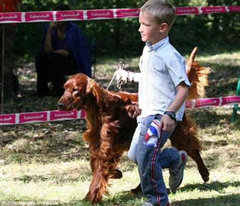 irish setter dies dog show poisoned crufts irish setter dog jagger s owners tell