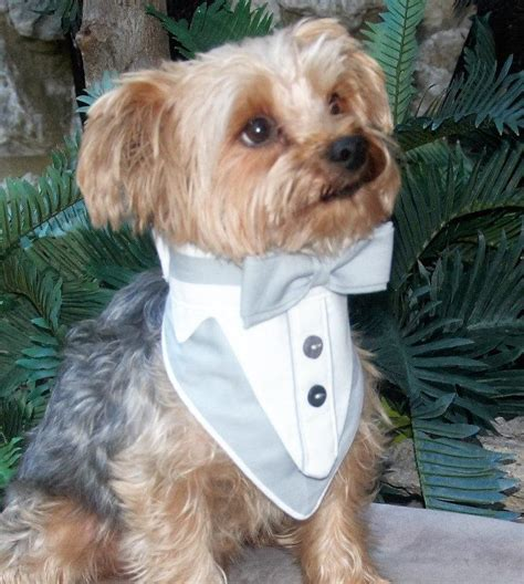 Wedding Attire For Dogs by Tuxedo Wedding Attire Tux Formal Wear