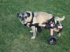 Dog cart dog wheels carts for dogs handicapped pets