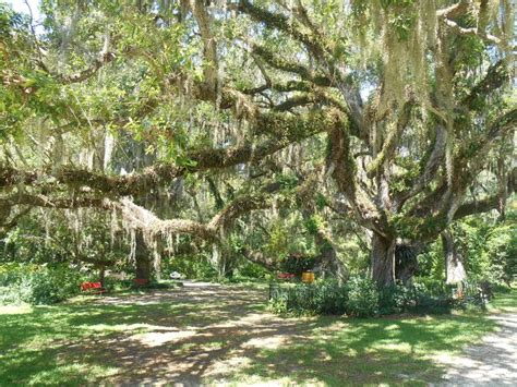 sugar mill botanical gardens dunlawton sugar mill gardens port orange florida let s go back gardens