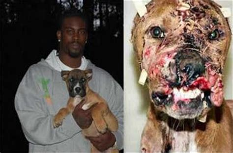 michael vick dog fighting house dog fighting history pit bulls cruelty and reasons why this must be stopped