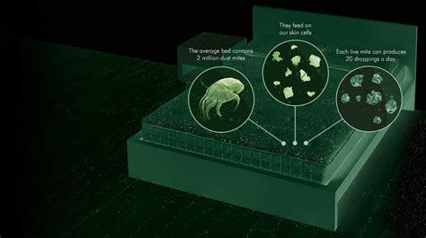 eliminare acari materasso come eliminare gli acari dal materasso con rimedi naturali