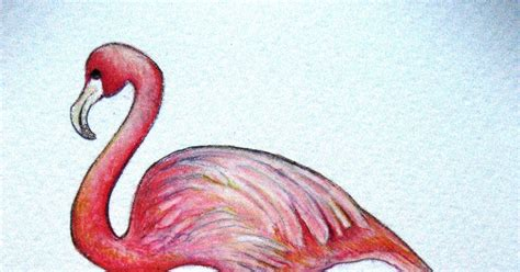 A Drawing a Day for a Year: September 24, 2011 - Flamingo