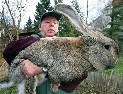 """rabbits, the surprisingly interesting """"tail"""" of this"""