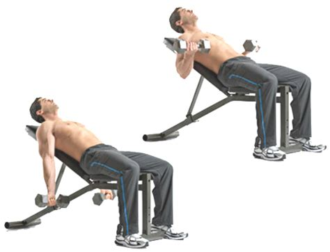 45 degree incline bench bicep workouts 4 exercises for bigger better biceps
