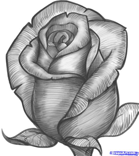 Drawing Roses by How To Draw A Bud Bud Step By Step Flowers