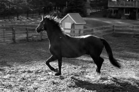 Imagenes En Blanco Y Negro De Caballos | caballo blanco y negro descargar fotos gratis