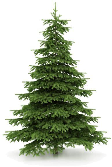 sales on christmas trees