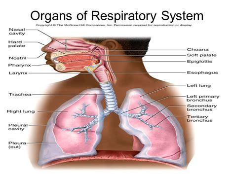 respiratory gas exchange bing images respiratory gas exchange bing images