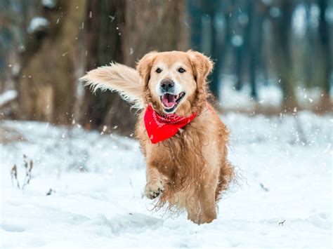winter dogs 5 ways to keep your active this winter petmd