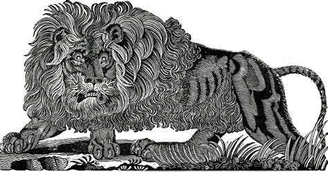 public domain lion image  graphics fairy