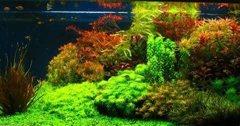 Eco One Aquaspace Aquarium Tanaman Hias aquaspace style aquascape ikan hias dan tanaman air