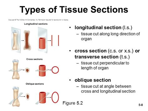 Kinds Of Sectioning by Chapter 3 4 Cells And Tissues Ppt