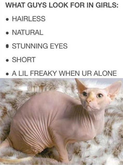 Hairless Cat Meme - 70 best hairless cats images on pinterest hairless cats