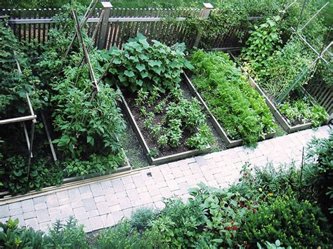 Backyard Vegetable Gardening Guide by Growing An Organic Garden Tips And Tricks The Vegetable