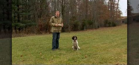 how to your to retrieve birds how to teach your to retrieve 171 dogs wonderhowto