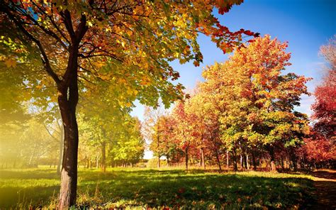 colorful tree wallpaper colorful autumn landscape wallpapers and images