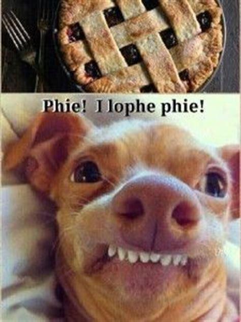 Overbite Dog Meme - 89 best lisp meme dog images on pinterest