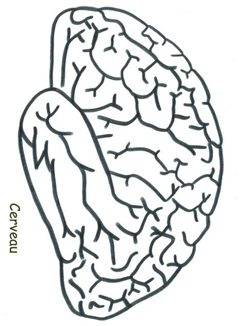 Coloriage Du Cerveau T 234 Te 224 Modeler