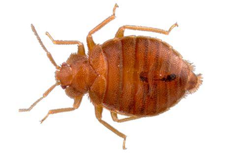 images bed bugs bug database hulett environmental service