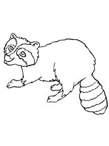 raccoon coloring page free printable raccoon coloring pages for