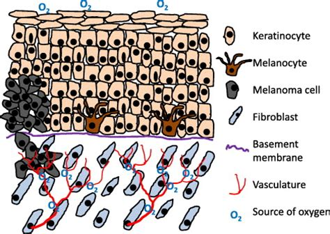 pattern analysis of tumors of epidermis and its appendages emergence of microstructural patterns in skin cancer a