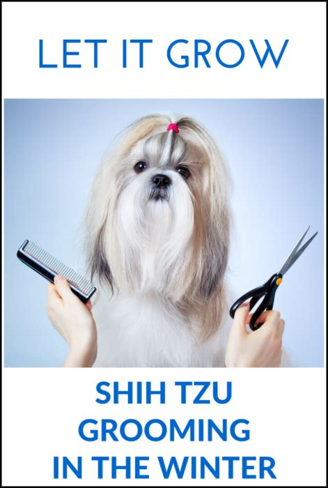 best way to groom a shih tzu shih tzu hair breeds picture