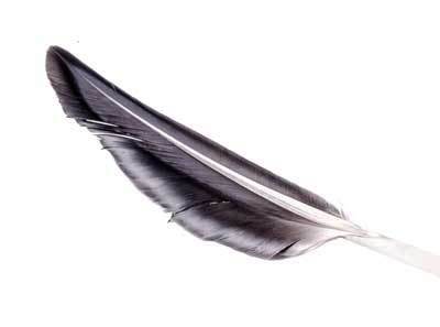 What Does A Feather Symbolize Feather Symbolism Black Feather Meaning